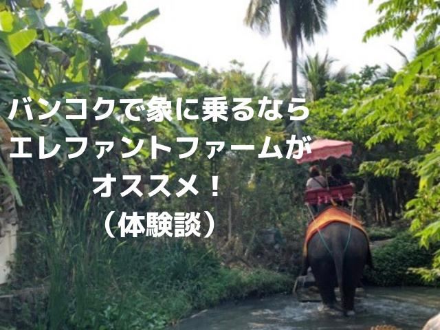 elephant farm bangkok