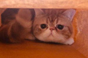 1人暮らし猫